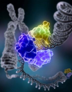 CRISPR Blog Image